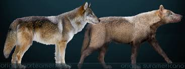 Dire Wolf Size Chart Dire Wolf Wiktionary