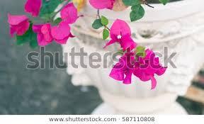 Paper Flower Base Beautiful Paper Flower Bougainvillea Flower Vase Stock Photo Edit