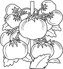 Disegni Per Bambini Da Stampare E Colorare Frutta By Megghynet