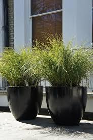 outdoor garden planters. Contemporary Grass In Polystone Pots £199 (each) Outdoor Garden Planters A