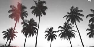 Palm Trees Sunset Twitter Header