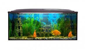 Wonderful Die Richtige Beleuchtung Im Aquarium