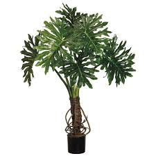 home 4 foot outdoor split leaf philodendron potted