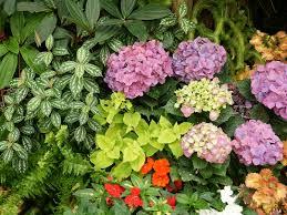 flowers for garden. Flowers For Garden