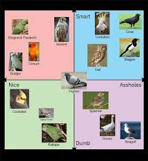 Cockatiel Chart Useful Bird Chart Funny
