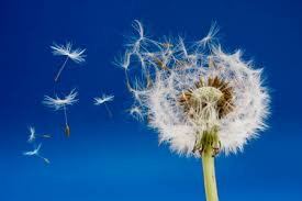 pollens ile ilgili görsel sonucu