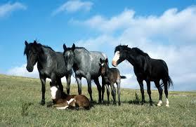 Paard Dier Wikipedia
