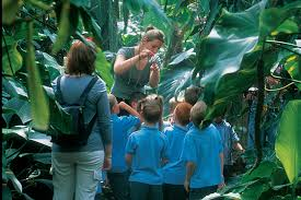 schools sustainability challenge the living rainforest school tour