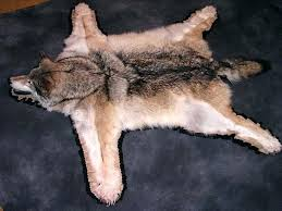 wolf skin rug wolf skin rug wolf skin rug faux wolf skin rug wolf skin rug