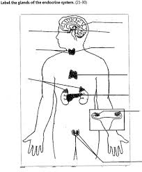 Endocrine glands diagram unlabeled system noticeable
