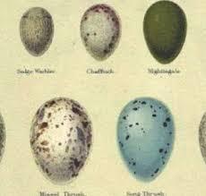 Egg Identification Chart Bird Egg Identification Photos Lookanimals Com