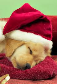 christmas puppies wallpaper.  Puppies Christmas Puppies3Wallpapers IPhone Parallax Puppies Inside Wallpaper S