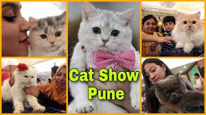 Cat Show Pune 2020 || The Feline club of India || CHAMPIONSHIP CAT SHOW ||  simply pratik vlogs - YouTube