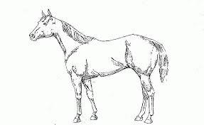 Paarden Kleurplaten Animaatjesnl