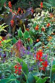 Tropical Flower Garden Landscape Designs Pin On Tropical Plants