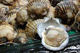 Scallop Facts What Is A Scallop How To Buy Scallops