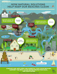 dirtying the clean water act the national wildlife federation blog a graph showing how streams and wetlands are vital to downstream waters infographic courtesy of