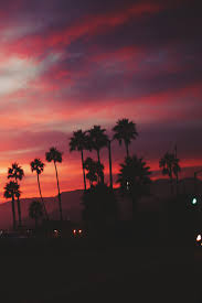 palm trees sunset tumblr. Sunset, Summer, And Sky Image Palm Trees Sunset Tumblr