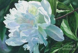 peony painting white peony by sharon freeman