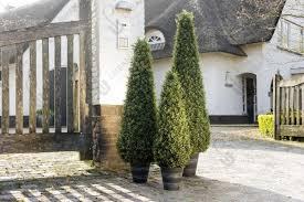 artificial outdoor plants uk