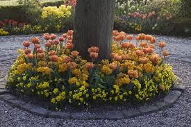 flowers under trees