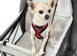 dog beds for small dogs fancy uk bedding bed linen