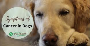 symptoms of dog cancer