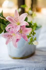 Background Pink Flower Whatsapp ...