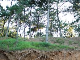 four causes of soil erosion luxury