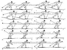 Лыжные шаги виды Техника классических лыжных ходов реферат В цикл движений попеременного двухшажного хода входят два скользящих шага и сопровождающие их толчки разноименными палками