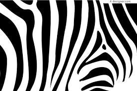 Zebra Patterns Gorgeous Zebra Patterns Thevillasco