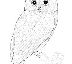 Owls Coloring Free Printable Christmas Owl Coloring Pages
