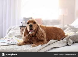 Cute Cocker Spaniel Dog Bed Home Warm ...