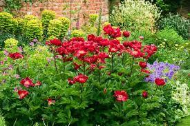 great perennials for mid atlantic gardens