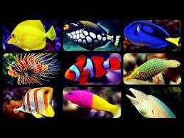 Types Of Saltwater Aquarium Fish Coral Reef Tank Fish Sharks Puffers Clownfish