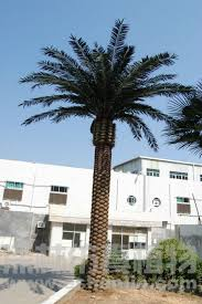 artificial outdoor palm trees/artificial date tree plant Artificial Outdoor Palm Trees/artificial Date Tree Plant - Buy