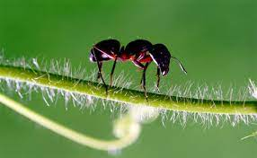 ant how to get rid of ants