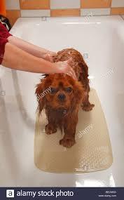 Articles with Bathtub King Torrance Reviews Tag: Ergonomic Bathtub ...