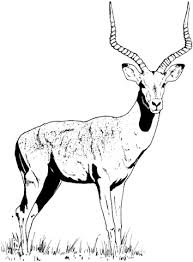Small Picture Impala Gazelle coloring page Free Printable Coloring Pages