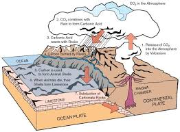 the carbon cycle biological and geological the geological carbon cycle