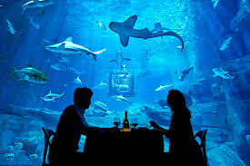 underwater hotel atlantis. Remember The Real Housewives Of Beverly Hills\u0027 Insane Dubai Hotel, With Its Underwater Suite? Well, You\u0027re Welcome To Visit Atlantis, Palm For Yourself Hotel Atlantis