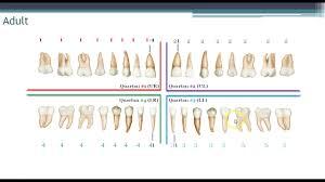 World Dental Federation Fdi Charting System Youtube