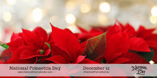 NATIONAL POINSETTIA DAY - December 12 - National Day Calendar
