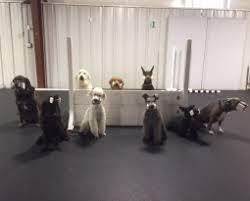 November 2017 – Tulsa Dog Training Club
