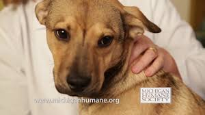 humane society ads. Wonderful Ads Michigan Humane Society  30 Second Commercial On Ads