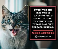 Curiosity Quotes Delectable 48 Curiosity Quotes That'll Inspire You To Never Stop Questioning