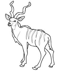 kudu animal coloring pages