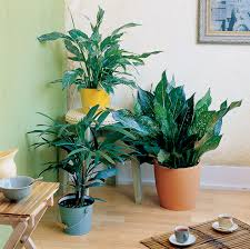 Extremely Low Light Plants Easy Care Indoor Plants Sunset Magazine