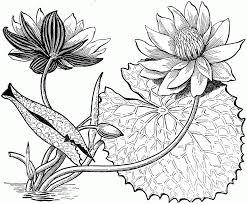 Cara menggambar sasuke simple dan mudah youtube. 16 Contoh Gambar Sketsa Bunga Yang Mudah Digambar Hamparan