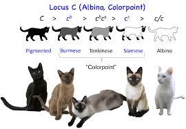 Cat Coat Color Chart